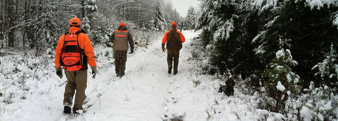 Grouse hunting with dogs in Maine in October