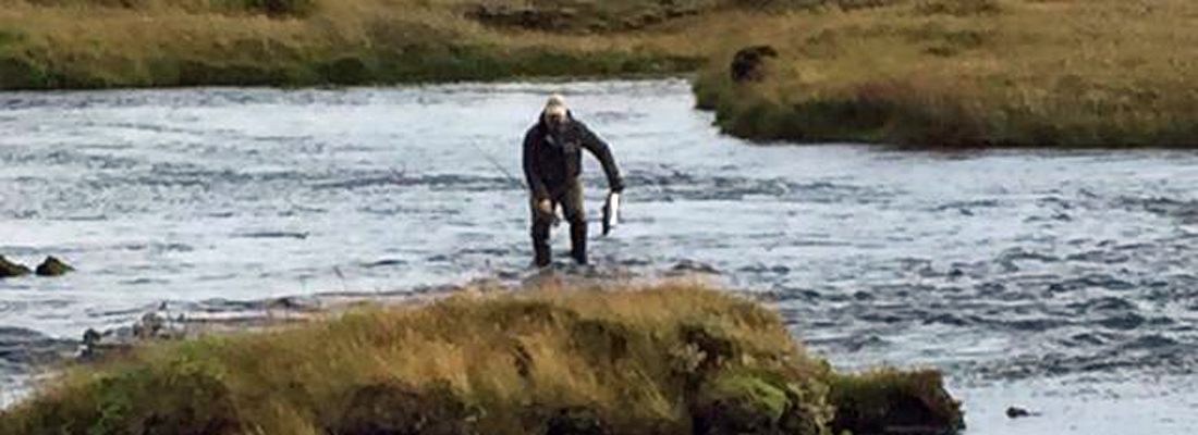 Tailing an Atlantic Salmon in Iceland