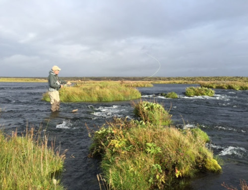 Fly fish in Iceland