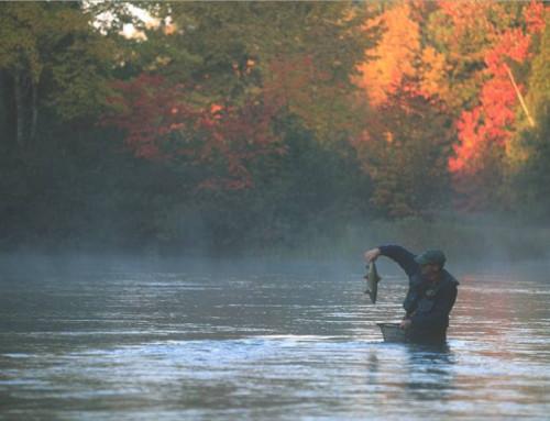 Fall Salmon Season Just Around the Corner