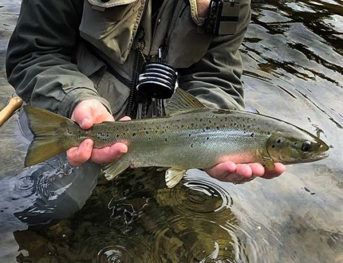 Fall Salmon Fishing